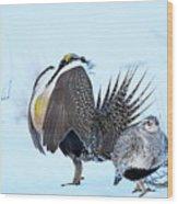 Sage Grouse Wood Print