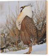 Sage Grouse Strut Wood Print