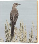Sage Thrasher On Perch Wood Print