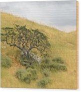 Sage Under Oak Wood Print