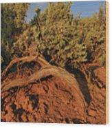 Sagebrush At Sunset Wood Print