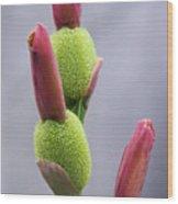Saging-saging Flower Buds Macro Wood Print