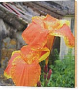 Saging Saging Large Tropical Flower Wood Print