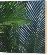 Sago Palm Fronds Wood Print
