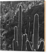 Saguaro Backlit Black And White Wood Print