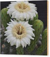 Saguaro Blooms II Wood Print
