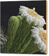 Saguaro Blooms  Wood Print