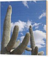 Saguaro Cacti  Wood Print