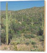 Saguaro Cacti Tucson Az Wood Print