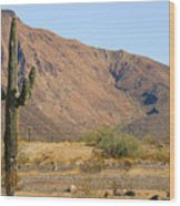 Saguaro Cactus Arizona Wood Print