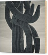 Saguaro Cactus Armed And Twisted Wood Print