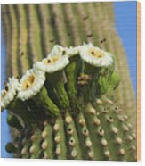 Saguaro Cactus Flower 8 Wood Print
