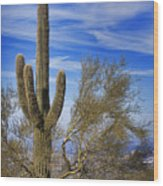 Saguaro Cactus Of The Desert Southwest Wood Print