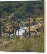 Saguaro Creek Wood Print