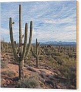 Saguaro Fields Wood Print
