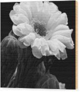 Saguaro First Bloom Wood Print