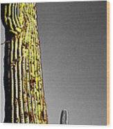 Saguaro Gestures Wood Print