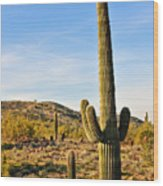 Saguaro Hill Wood Print
