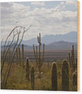 Saguaro National Park Az Wood Print