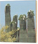 Saguaro Sisters Wood Print
