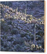 Saguaro Sunrise Wood Print