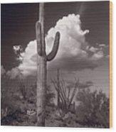 Saguaro Sunset Arizona Bw Wood Print