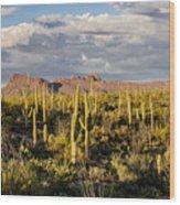Saguaronatlparkeveninglight Wood Print