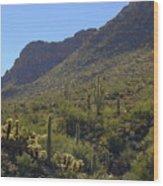 Saguaros And Other Greenery  Wood Print