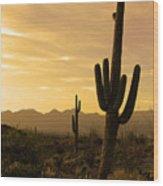 Saguaros At Sunset Wood Print