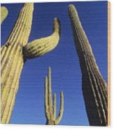 Saguaros Dwaft One Another Wood Print