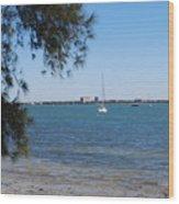 Sail Boat On Sarasota Bay Wood Print