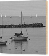 Sailboats And Ducks B-w Wood Print