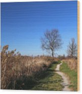 Saint Johns Marsh In Fall 3 Wood Print
