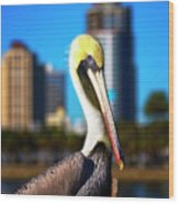 Saint Petersburg Pelican Wood Print