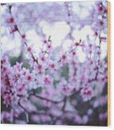 Sakura Blossom Wood Print