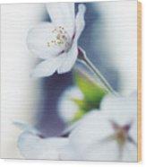 Sakura Cherry Blossom Flowers Wood Print