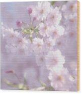 Sakura Trees Wood Print