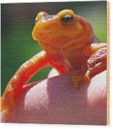 Salamander Wood Print