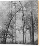Salem Wood Print