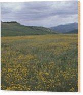 Salisbury Potrero - Sierra Madre Mountains Wood Print