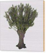 Salix Viminalis Tree Wood Print
