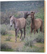 Salt River Wild Horses-img_747217 Wood Print