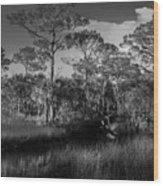 Salt Springs Wood Print