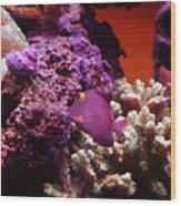 Salt Water  Aquarium Wood Print