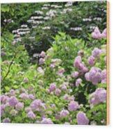 Pink Hydrangeas In Mirabell Garden Wood Print