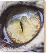 Sammy's Eye Wood Print