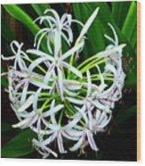 Samoan Spider Lily Wood Print