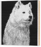 Samoyed Dog Wood Print