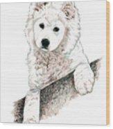 Samoyed Puppy Wood Print