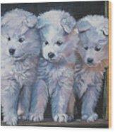 Samoyed Pups Wood Print
